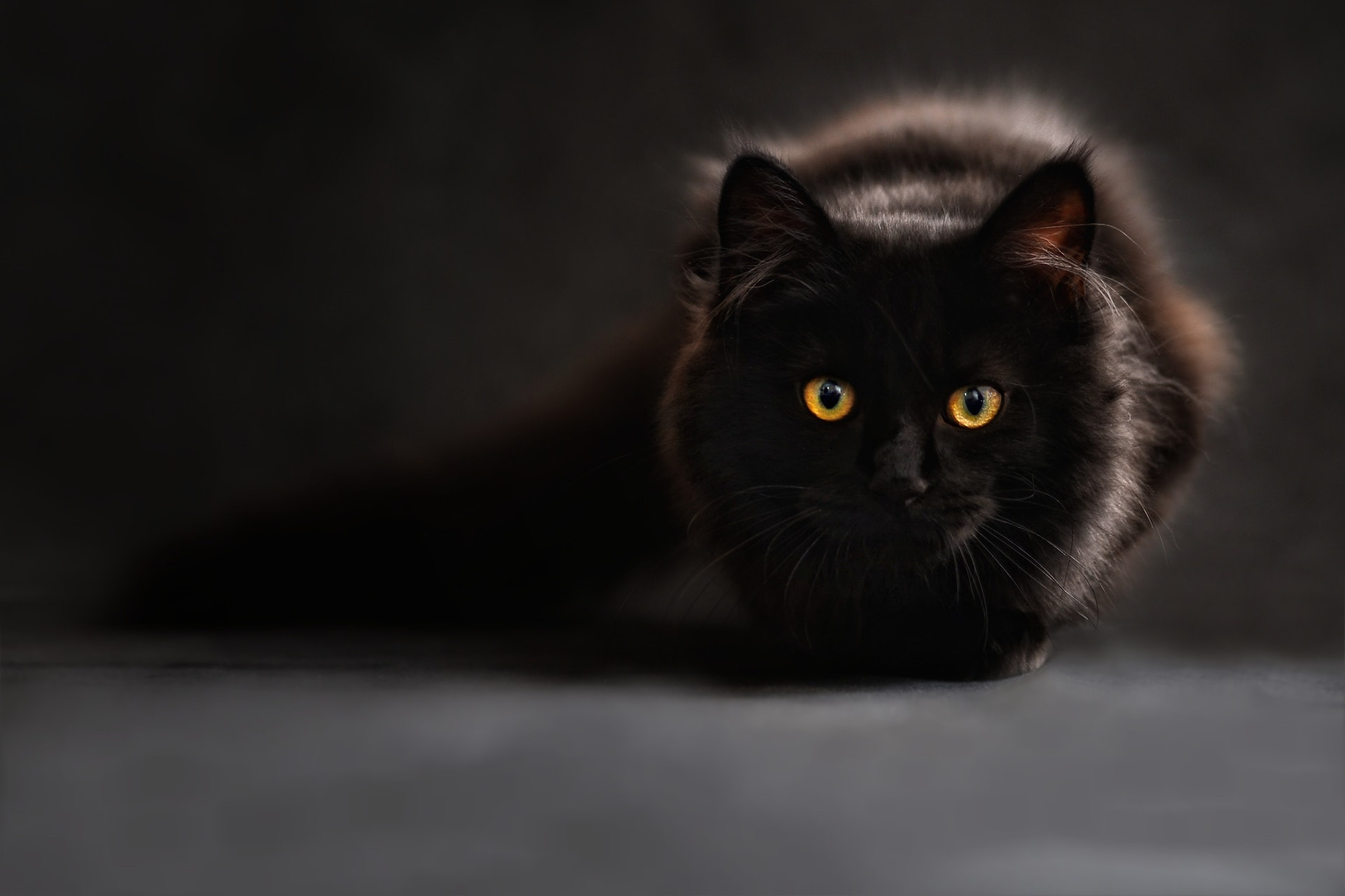 A kilenclelkű macska